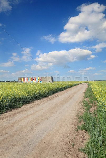Agriculture, country road through canola field Stock photo © simazoran