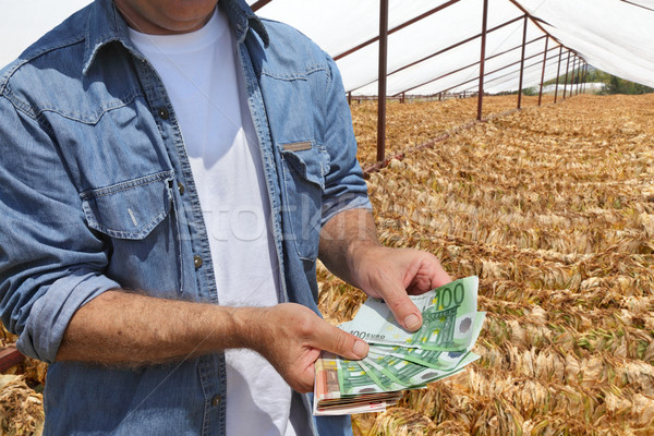 Farmer hold money with tobacco in background Stock photo © simazoran