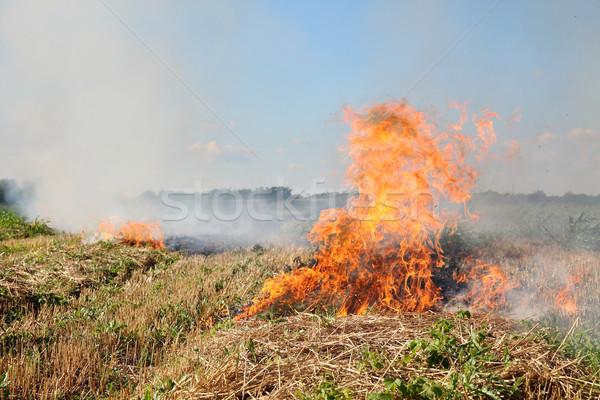 огня области пшеницы урожай лет пейзаж Сток-фото © simazoran