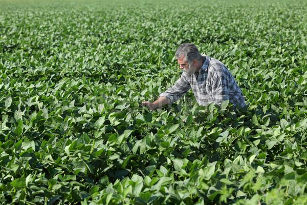 фермер соя области соя завода весны Сток-фото © simazoran