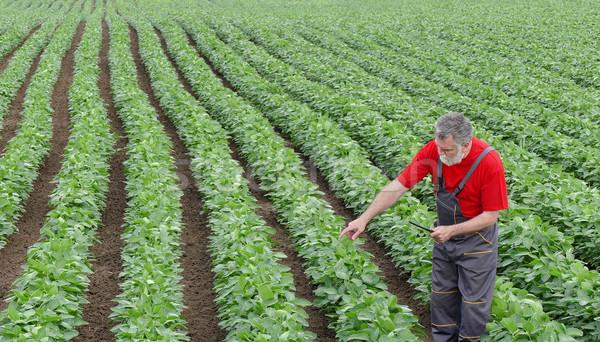 фермер соя боб области указывая соя Сток-фото © simazoran