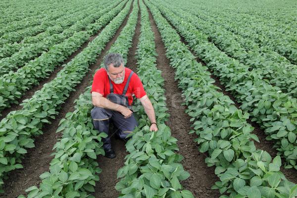 çiftçi soya alan soya bitki bahar Stok fotoğraf © simazoran