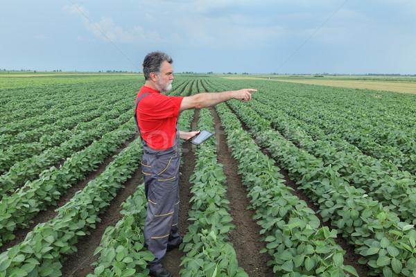 çiftçi soya fasulye alan tablet soya Stok fotoğraf © simazoran