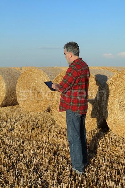 Rolnik bela słomy dziedzinie zbiorów pole pszenicy Zdjęcia stock © simazoran