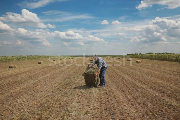 Bála széna mező gazda korai nyár Stock fotó © simazoran