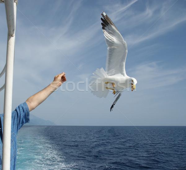 鴎 飛行 食品 人の手 手 ストックフォト © simazoran