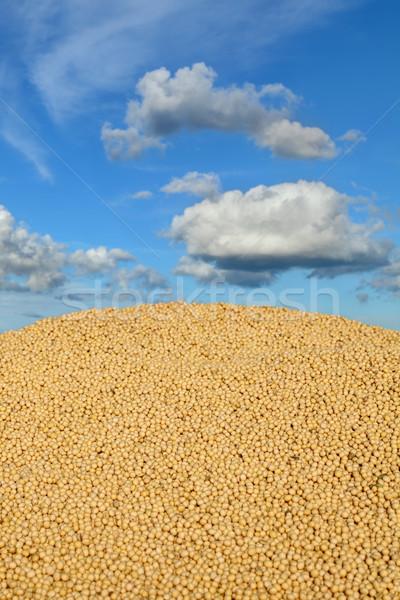 Tarım soya hasat soya fasulye Stok fotoğraf © simazoran