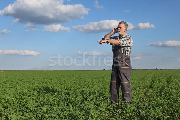 Farmer in clover  field Stock photo © simazoran