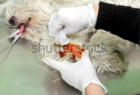 Veterinario veterinario cirugía herido perro pierna Foto stock © simazoran
