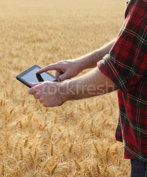 農業 農家 調べる 麦畑 品質 小麦 ストックフォト © simazoran