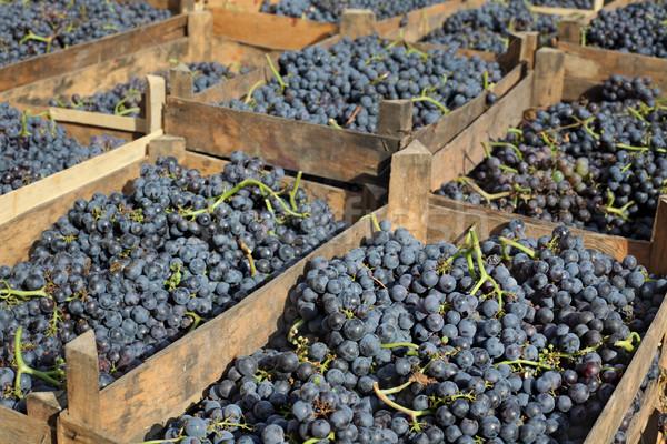 Merlot de uva vino Foto stock © simazoran