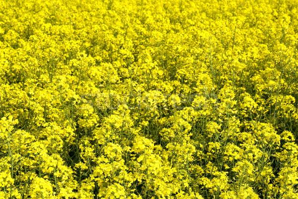 Olaj nemi erőszak színes tavasz természet háttér Stock fotó © simazoran