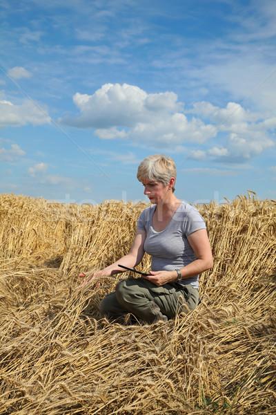 Agriculture, desperate farmer in damaged wheat field Stock photo © simazoran