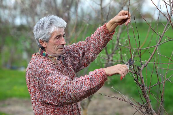 Werknemer boom boomgaard landbouw volwassen man Stockfoto © simazoran