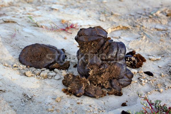 Fertilizer Stock photo © simazoran