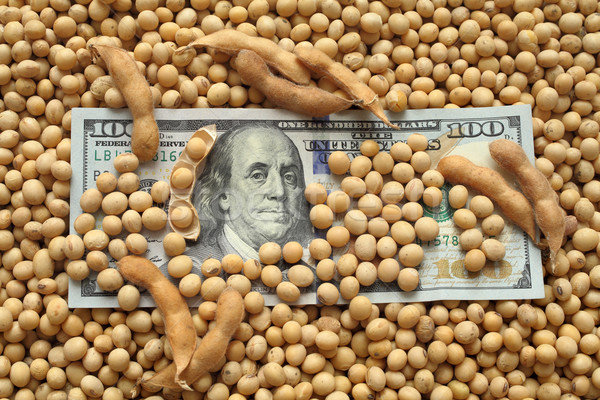 Agricultural concept, soybean and money Stock photo © simazoran