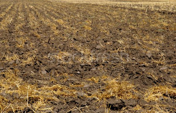 Eke föld nyár aratás búza természet Stock fotó © simazoran