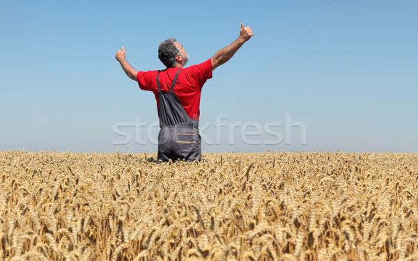 Agricultural scene, farmer in wheat field, harvest time Stock photo © simazoran