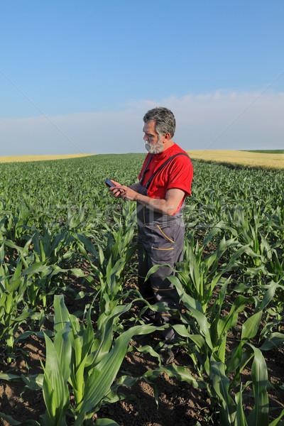 Agricultural scene, farmer in corn field Stock photo © simazoran