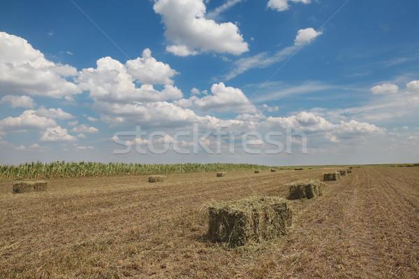 Baal hooi veld vroeg zomer wolken Stockfoto © simazoran