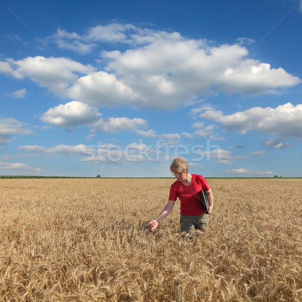 Agriculture, agronomist examine wheat field Stock photo © simazoran