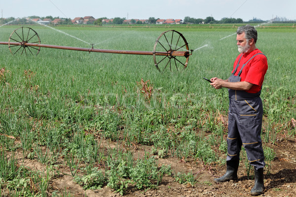 Agricultural scene, farmer in onion field with watering system Stock photo © simazoran