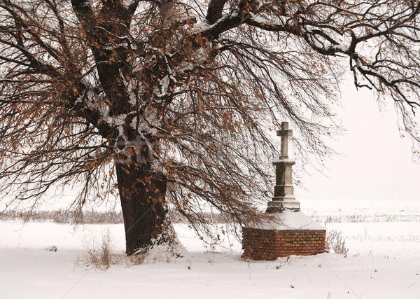 çapraz meşe ağacı ağaç ahşap doğa kar Stok fotoğraf © simazoran