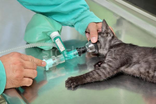 ветеринарный кошки хирургии животного анестезия дыхание Сток-фото © simazoran