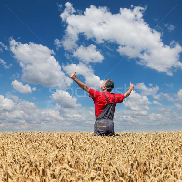 ストックフォト: 農業の · シーン · 幸せ · 農家 · 麦畑 · 農業
