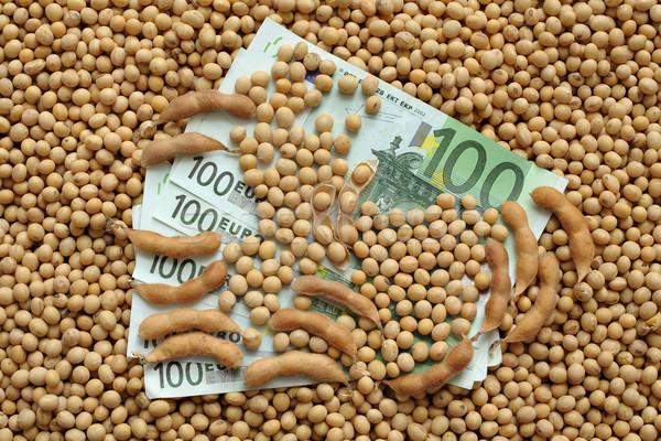 Agricola soia soldi soia fagioli Foto d'archivio © simazoran