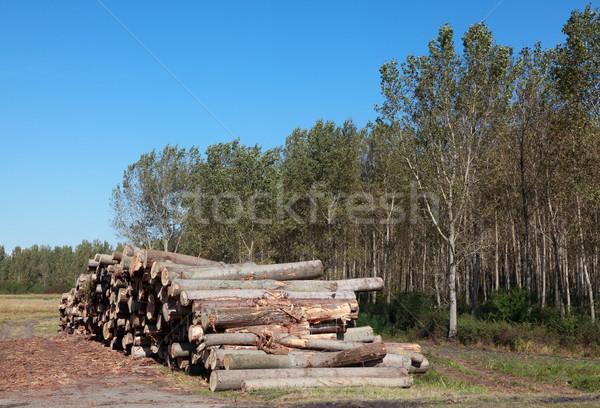 Timmerhout industrie hout hoop bos Blauw Stockfoto © simazoran