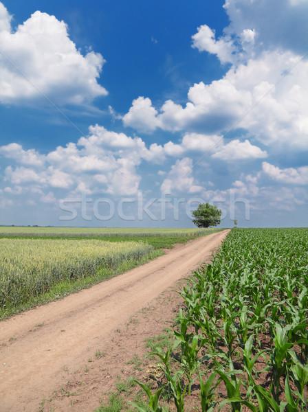 Kırsal sahne mısır gökyüzü ağaç Stok fotoğraf © simazoran