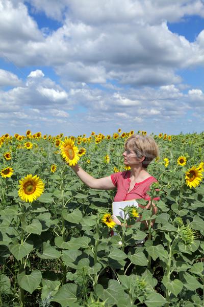 сельского хозяйства агрономия сельскохозяйственный эксперт качество подсолнечника Сток-фото © simazoran