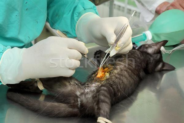 Veterinary, cat surgery Stock photo © simazoran