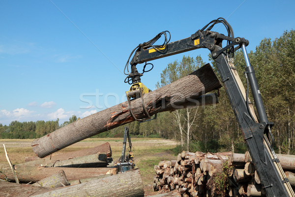 Wood exploitation Stock photo © simazoran