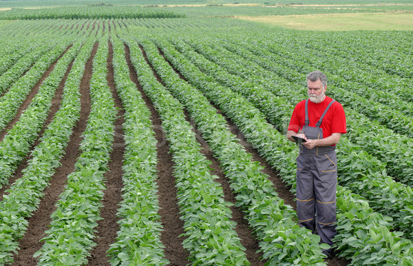 Farmer or agronomist in soy bean field with tablet Stock photo © simazoran