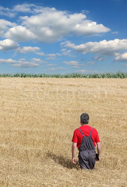 Agricultural scene, farmer or agronomist inspect wheat field Stock photo © simazoran