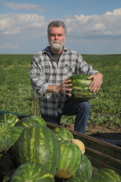 Farmer and watermelons at trailer Stock photo © simazoran