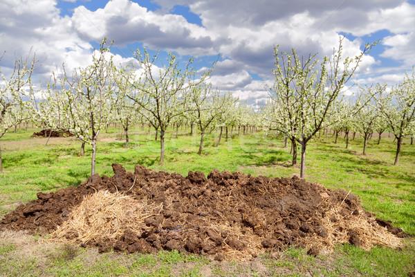 Landbouw hoop hemel bomen groene plant Stockfoto © simazoran