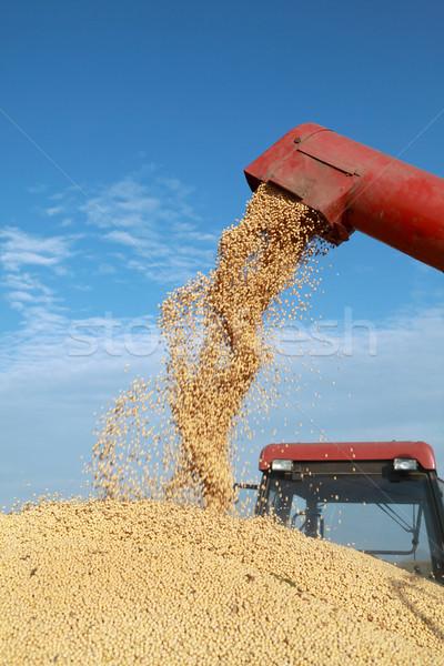 Harvest Stock photo © simazoran