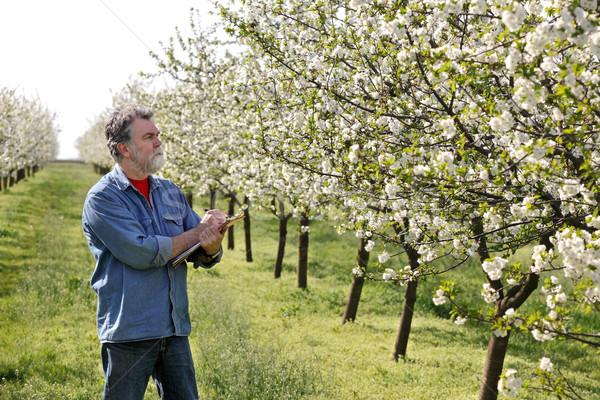 Farmer or agronomist in cherry orchard Stock photo © simazoran
