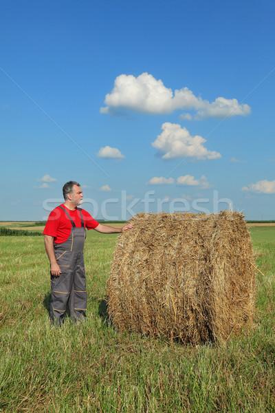 Jeans fardo feno campo cedo verão Foto stock © simazoran