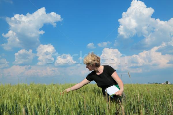Agrártudomány női mezőgazdasági szakértő minőség búza Stock fotó © simazoran