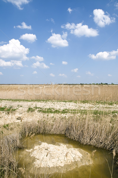 Marsh land Stock photo © simazoran
