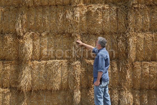 Rolnik bela słomy dziedzinie duży Zdjęcia stock © simazoran