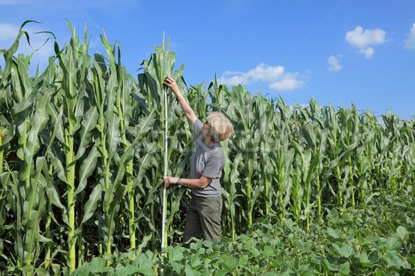 Agriculture, agronomist at farmland Stock photo © simazoran