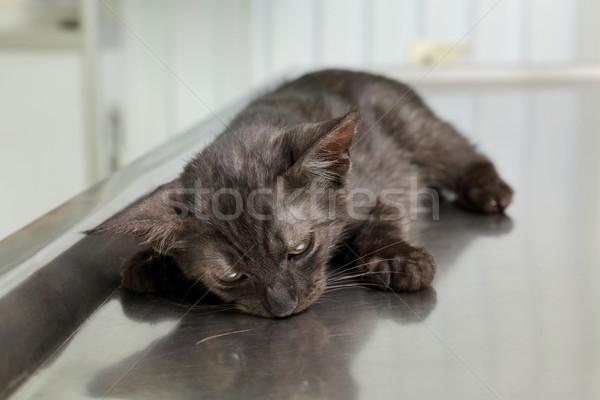 Veteriner kedi cerrahi hayvan anestezi doktor Stok fotoğraf © simazoran