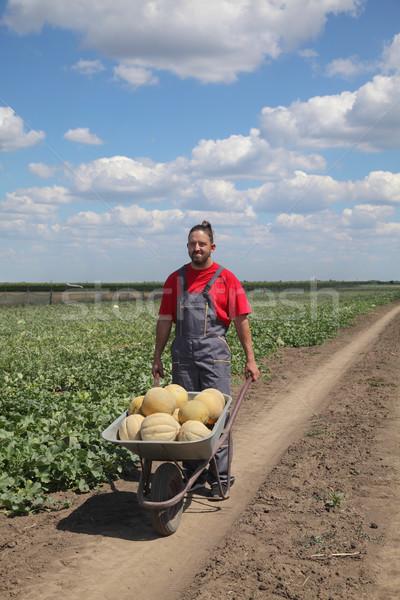 農家 手押し車 フィールド メロン スイカ ストックフォト © simazoran