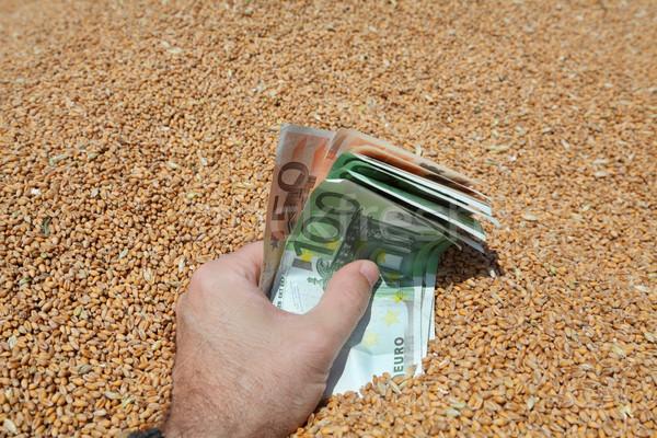 Tarım insan eli euro buğday Stok fotoğraf © simazoran