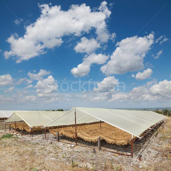Tabacco tradizionale modo tenda rurale cielo Foto d'archivio © simazoran
